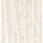 Zebra mica- White-800x640